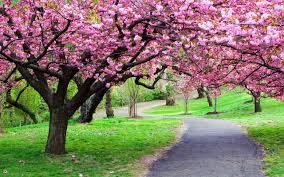 تدابیر فصل بهار (2)