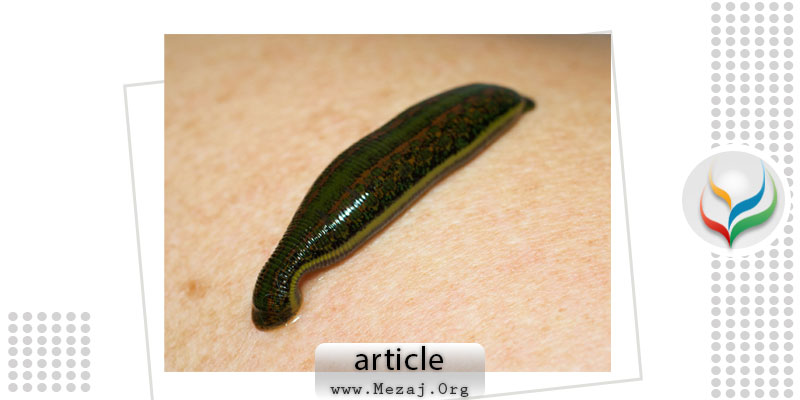 Safety and efficacy of leeching therapy for symptomatic knee osteoarthritis using Indian medicinal leech